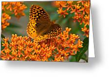 Frittalary Milkweed And Life Greeting Card