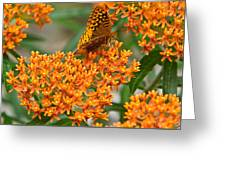 Frittalary Milkweed And Nectar Greeting Card