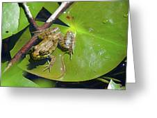 Frog 1 Greeting Card