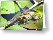 Frog 3 Greeting Card