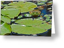 Frog Amongst The Lilypads Greeting Card
