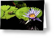 Frog And Lily Reflected Greeting Card