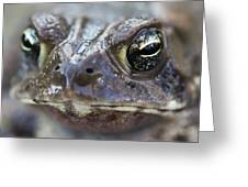 Frog Eyed Greeting Card