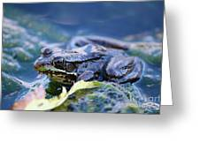 Frog In Water Greeting Card