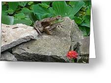 Frog On A Rock Greeting Card