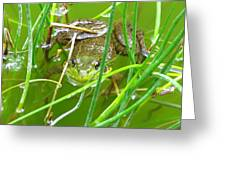 Frog Playing Hide N Seek Greeting Card