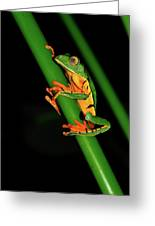 Frog Pole Vault  Greeting Card