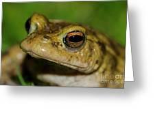 Frog Posing Greeting Card