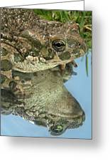 Frog Reflection Greeting Card