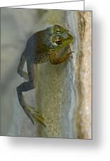 Frog Swim Greeting Card