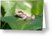 Froggie In The Pepper Patch Greeting Card