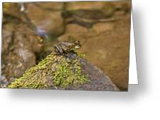 Froggy On A Hill Greeting Card