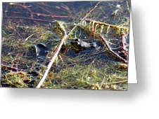 Froggy Pond Greeting Card