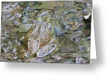 Frogs Eye View Greeting Card