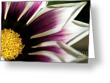 From Crimson To White Greeting Card
