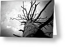 From Darkness Greeting Card