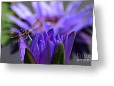 From The Water Lily Garden Greeting Card