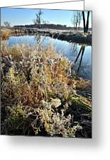 Frost Along Nippersink Creek In Glacial Park At Sunrise Greeting Card