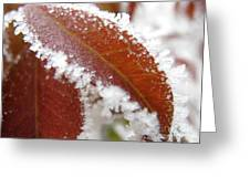 Frost And Leaf Greeting Card