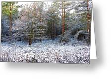 Frost Bite Greeting Card by Svetlana Sewell