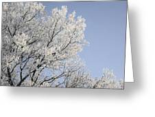 Frost Cover Maple Trees Greeting Card