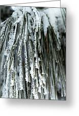 Frost Covered Pine Needles IIi Greeting Card