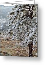 Frost-covered Pine Greeting Card