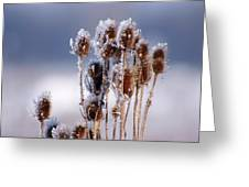 Frost In The Morning Greeting Card
