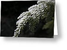 Frost On Pine Greeting Card