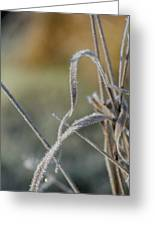 Frost On The Stems Greeting Card