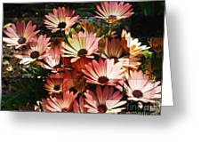 Frosted African Daisies Greeting Card