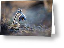 Frosted Beauty Greeting Card