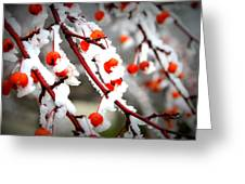 Frosted Berries Greeting Card