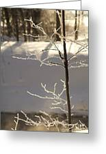 Frosted Branches Greeting Card
