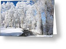 Frosted Cottonwoods Greeting Card