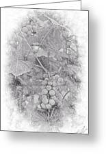 Frosted Grapes Vignette Greeting Card
