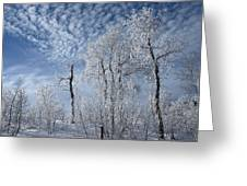 Frosted Hilltop Quakies Greeting Card