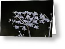 Frosted Hogweed Greeting Card