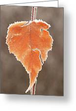 Frosted Leaf Greeting Card
