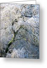 Frosted Limbs Greeting Card