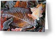 Frosted Painted Leaves Greeting Card