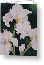 Frosted Pearl Iris Greeting Card