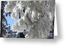 Frosted Pine Needles Greeting Card