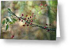 Frosted Red Berries And Green Leaves  Greeting Card