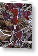 Frosted Red Green Briar Greeting Card