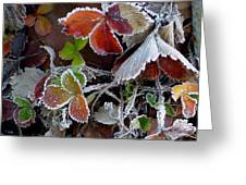 Frosted Strawberries Greeting Card
