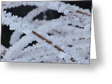 Frosted Twigs Greeting Card