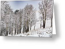Frosty Aspen Trees Greeting Card