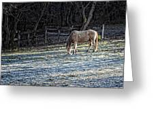 Frosty Autumn Morning Greeting Card