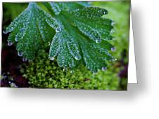 Frosty Dewdrops Greeting Card